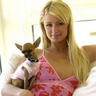 paris hilton hot video